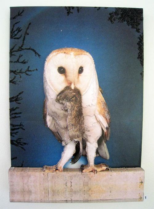 rose-owl