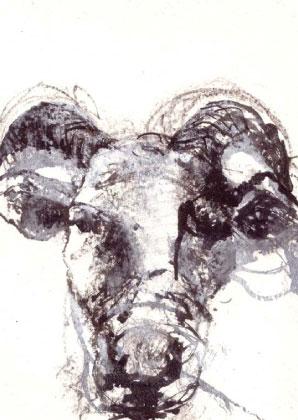 SheepA6-1