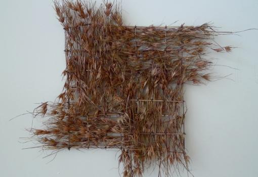 'Themeda Buddha', Mignon Patterson, kangaroo grass