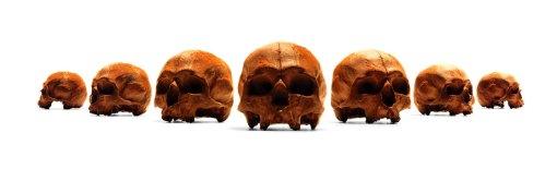 chocolate-human-skull-3