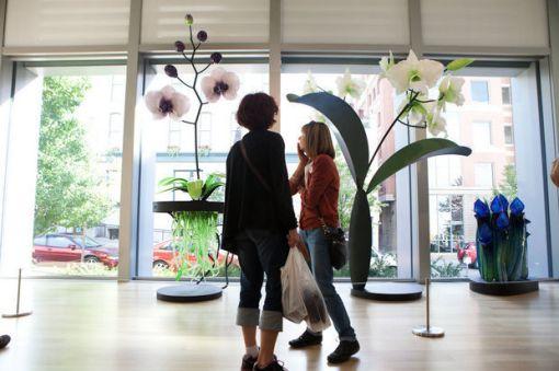 botanical-artprizejpg-6bbceaa930b30ff8